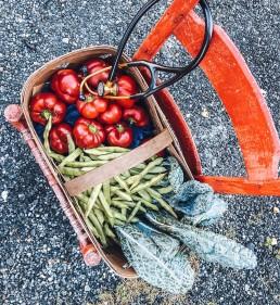 Basket full of nutritious vegetables